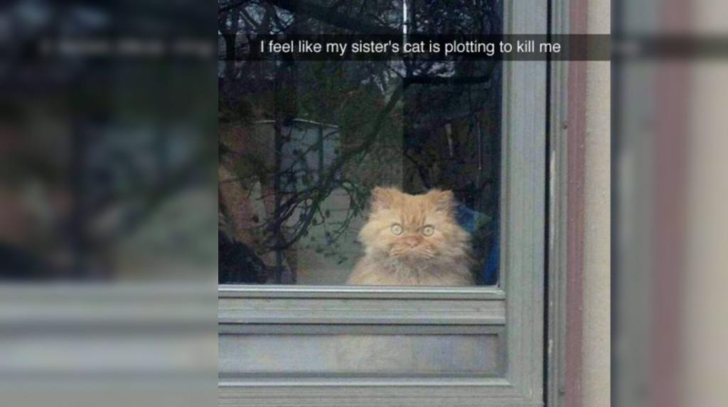 Cat in funny snapchat