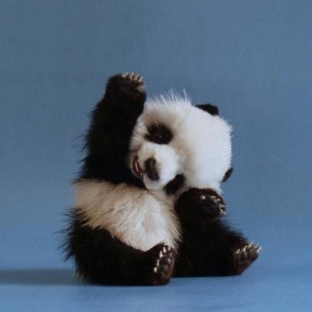 panda-with-a-question