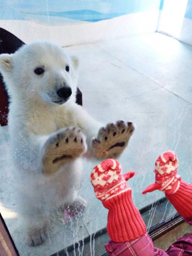 polar bear high five