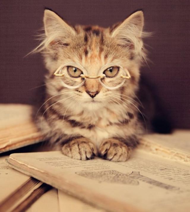 Cat Eye Glasses Quotes