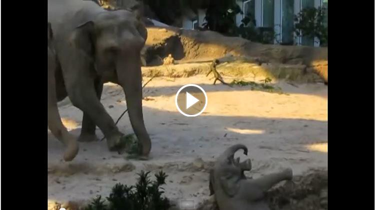 elephant saving kid
