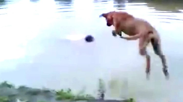 Confused Dog Is Heroic
