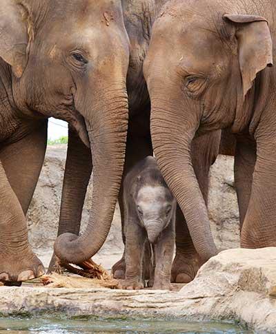 baby-elephant2