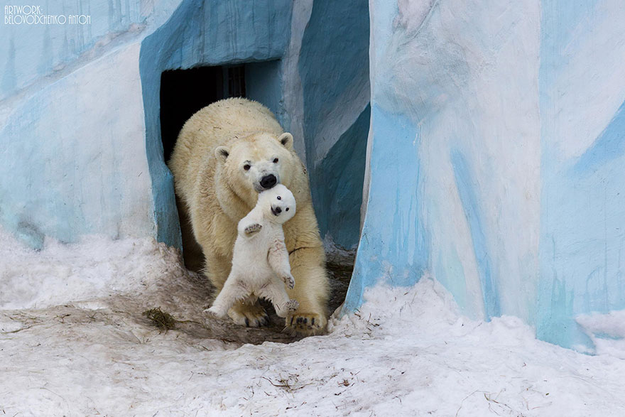 cool-animal-parents-polar-bear-snow