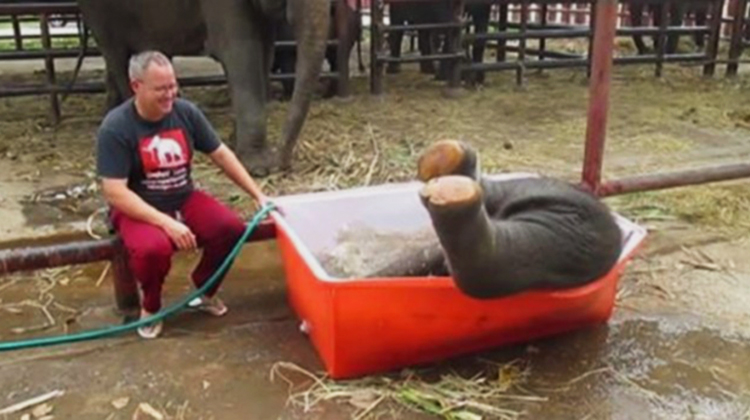elephant upside down in the tub