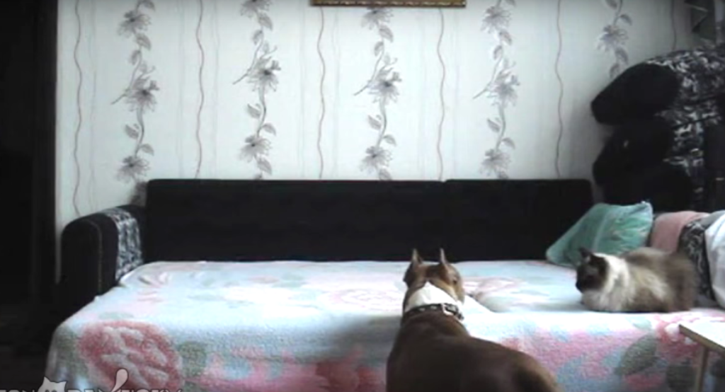 Dog jumping on bed