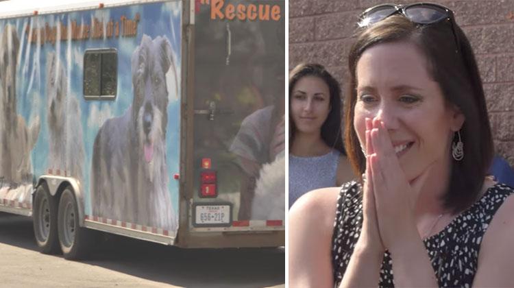 tracys dogs adoption event