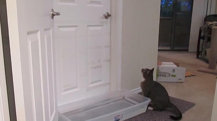 cat opens door even with water in front
