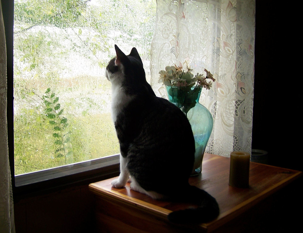oscar blind cat
