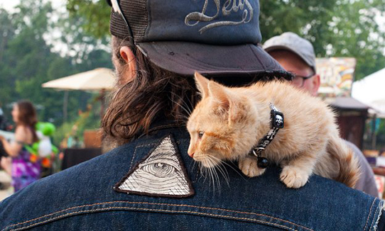 cat-shoulder