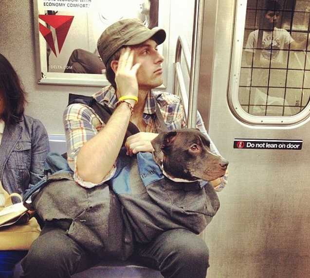 NYC Subway Banned Dogs Unless They Fit In A Bag So These - Nyc subway bans dogs unless fit bag new yorkers reacted