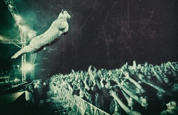 crowd surf