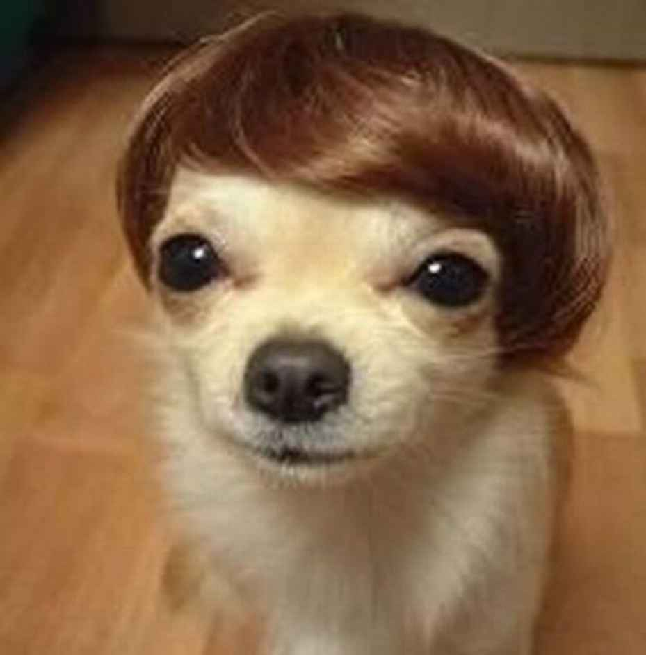 22 Pet Haircuts That Went Horribly Wrong