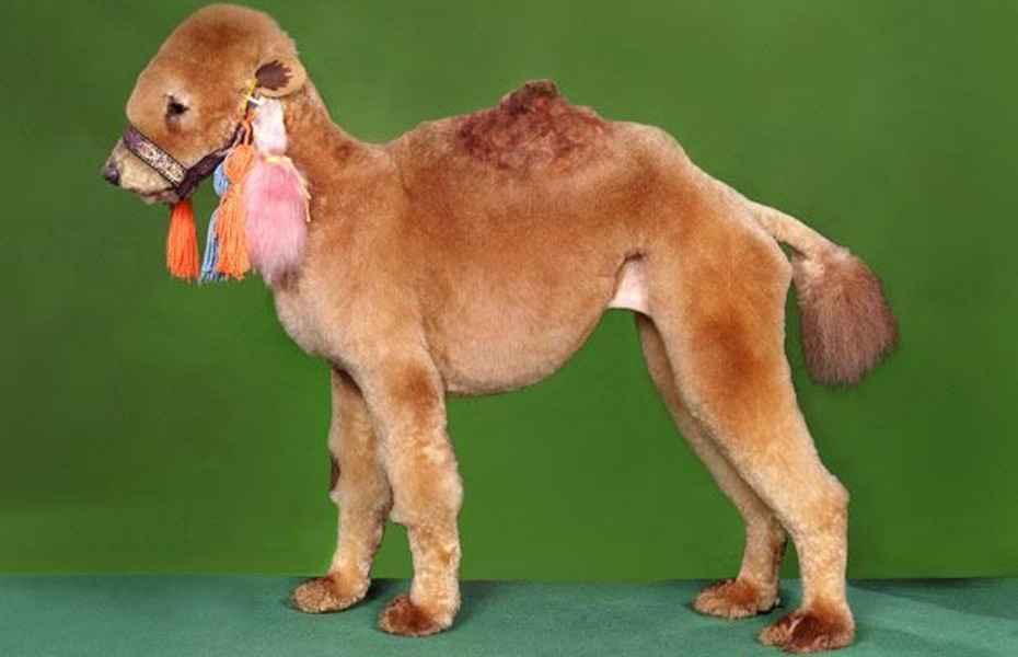 22 Pet Haircuts That Went Horribly Wrong