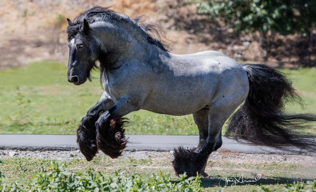 21 Horses With The Most Beautiful Rare Colors In The World Inspiremore