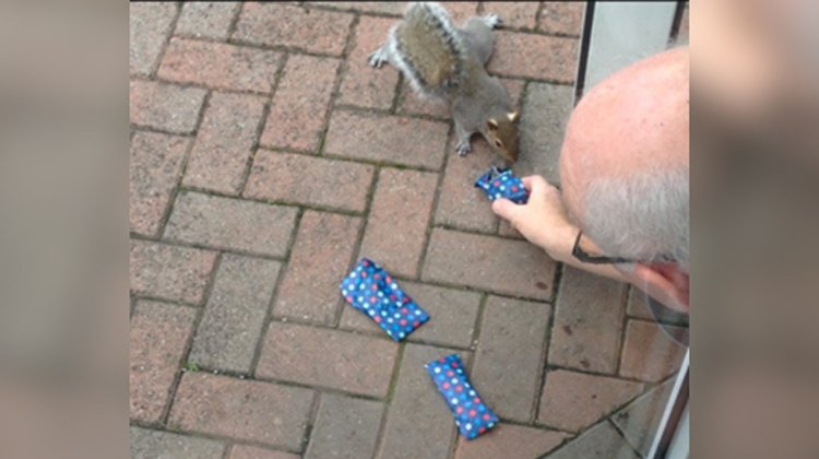 man hands presents to squirrels