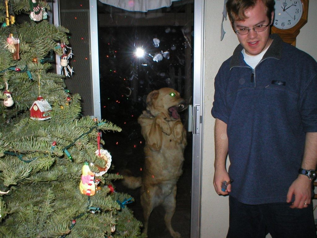 the-ghost-of-christmas-past-dog-photobomb-1024x768