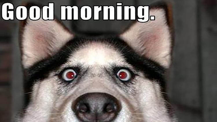 The gallery for --> Good Morning Dog Meme
