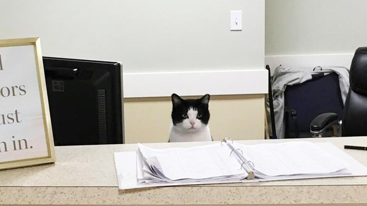 cat sneaks into nursing home reception area refuses to leave so they give her a job