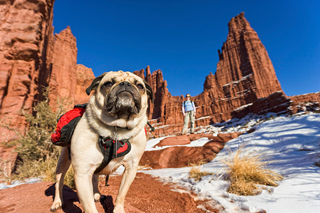 15 Outdoorsy Owners Who Refused To Leave Their Dogs At