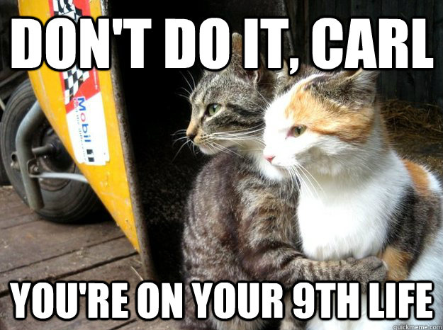 petnaturals2 22 of the greatest cat memes from across the web