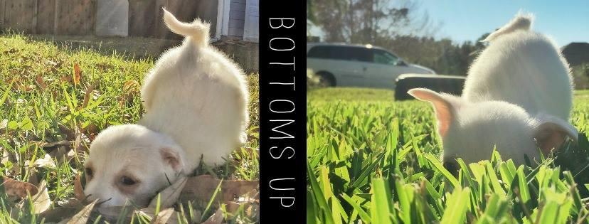 puppies-born-without-anus-nude-potos