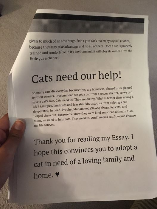 essay about cats