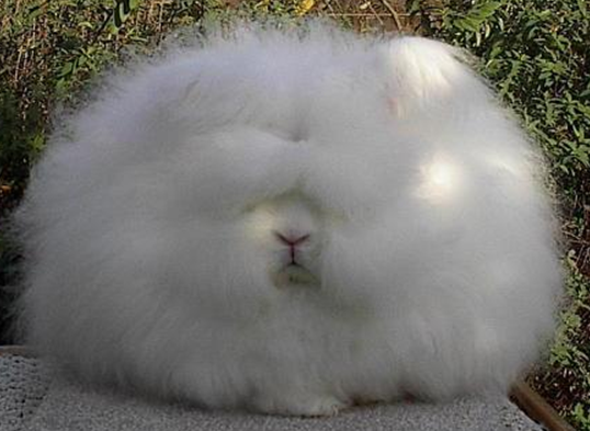 16 Of The Cutest Circular Animals In The World