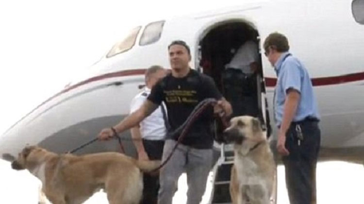 Airline refuses to fly marine 39 s dogs to new base so for Best airline to fly dogs