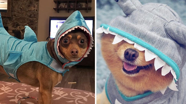 dogs in shark costumes