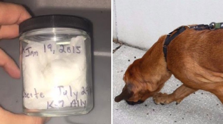 scent jar and dog sniffing