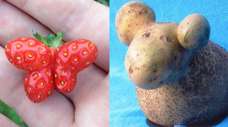 strawberry butterfly and potato sheep