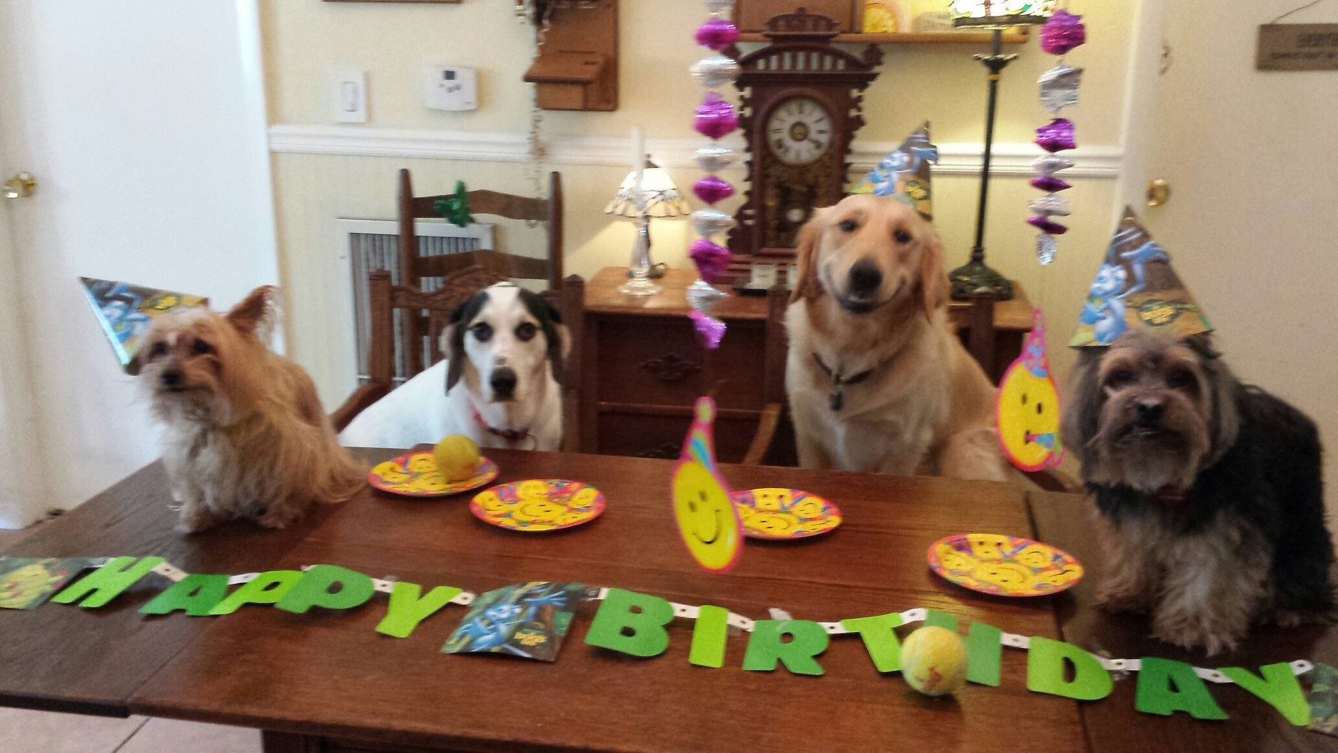 16 Dog Birthday Parties That Put Your Last Celebration To Shame Inspiremore
