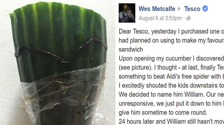 worm dies on cucumber Facebook message