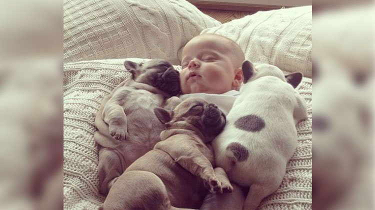 sleeping baby frenchies and baby