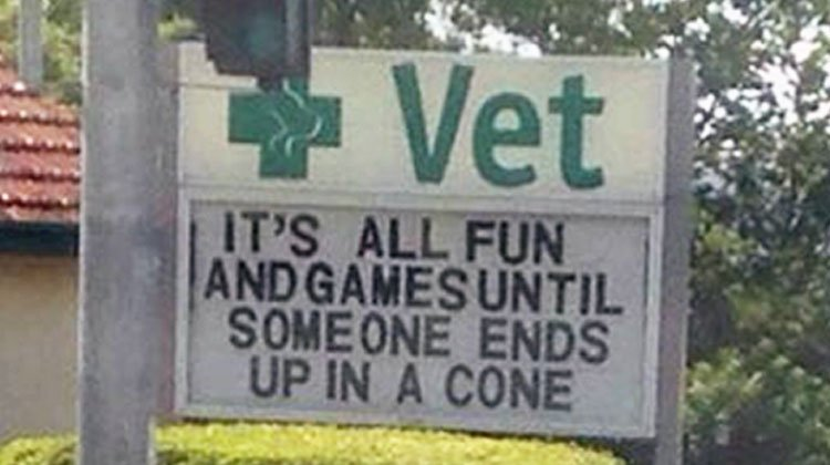 20 Hilarious Vet Signs That Will Have You Howling With Laughter
