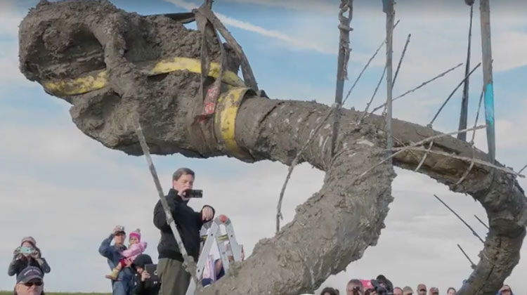 mammoth bones lifted out of ground