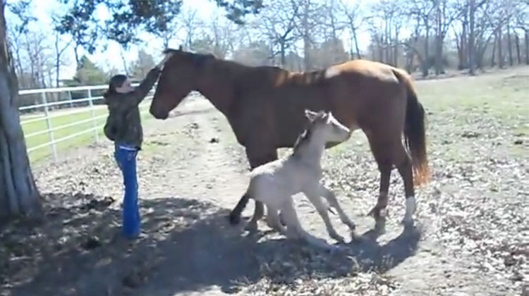 baby horse sneeze