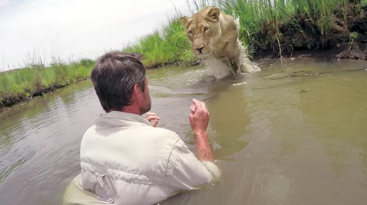 lion whisperer and meg lioness