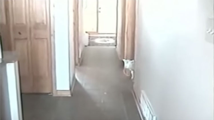 little lamb looks for mom