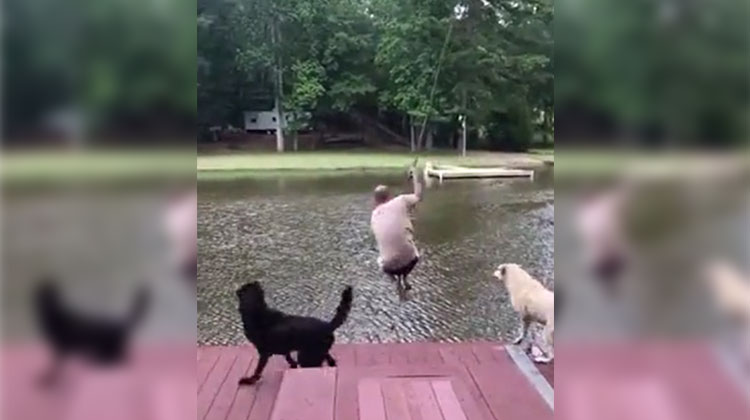 rope swing jump dog goes nuts