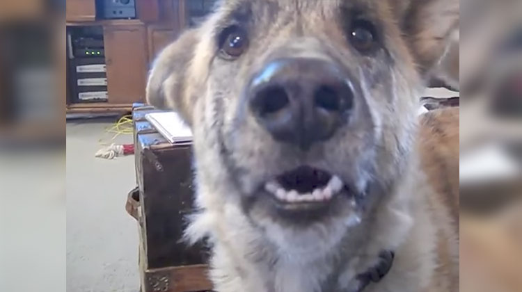 dog tease voiceover video