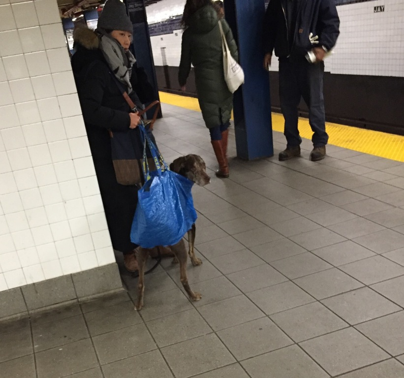 dog in ikea bag with legs through bottom