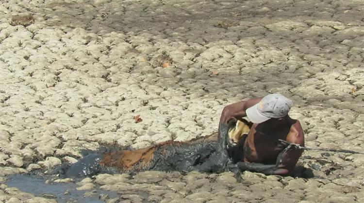 impala rescue zimbabwe