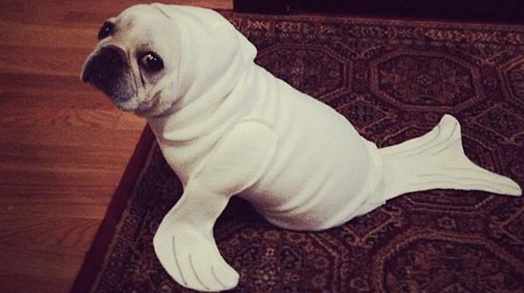 dog dressed as seal & 21 Funniest Dog Costumes Ever