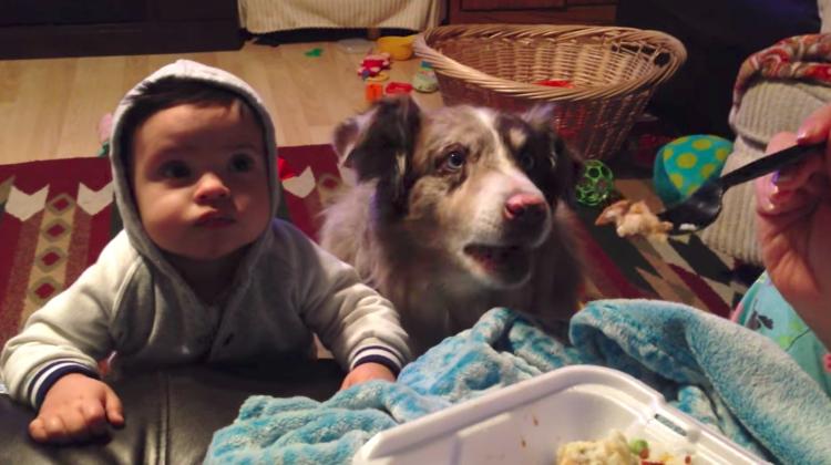 dog says mama