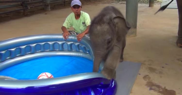 baby elephant bathtub