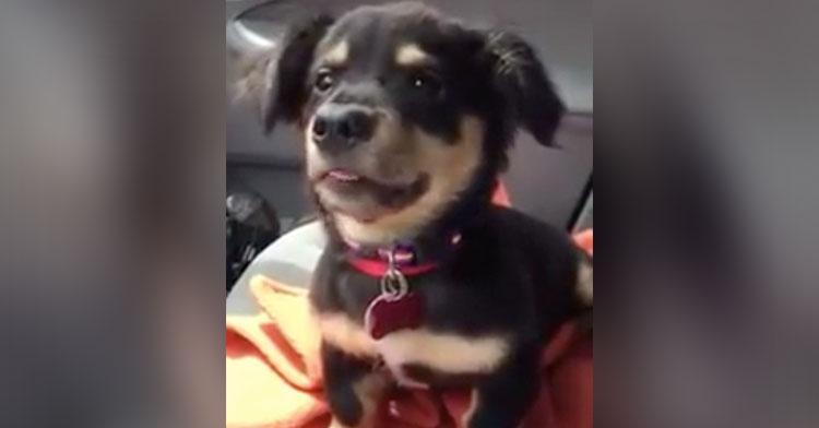 napoleon foster puppy