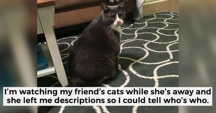 cat sitter key