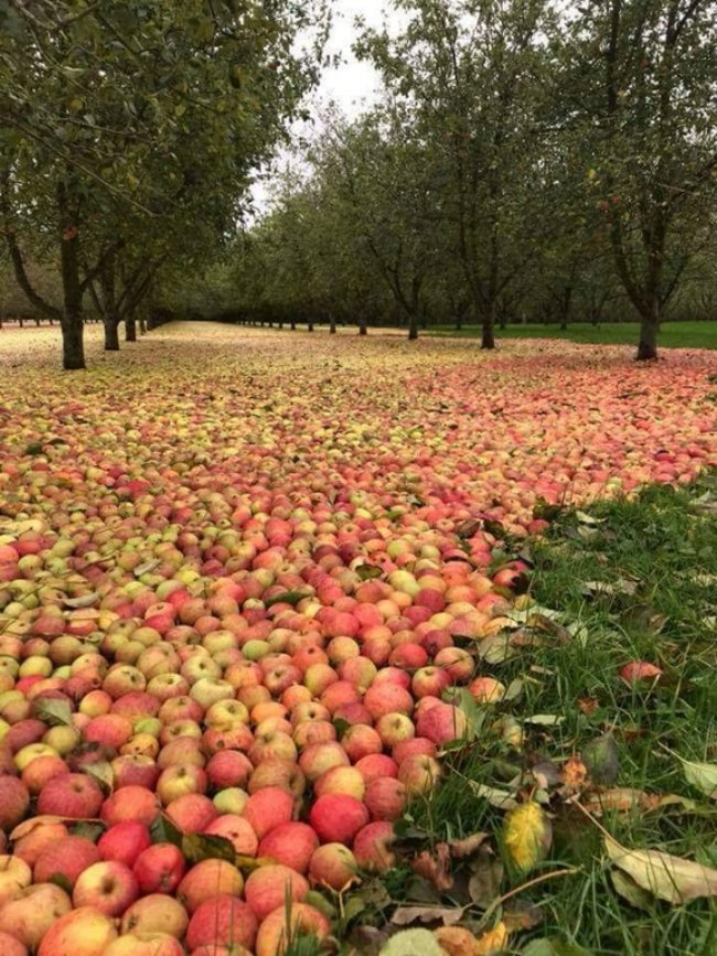 orchard pic